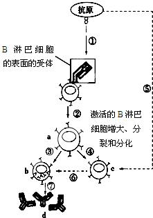 a.b.c表示细胞.请据图回答下列问题 1 该特异性免疫属于体液免疫.图
