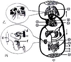 吸气时,肺内气压的变化以及气体进如肺部的情况是 A 肺内气压降低,气体进肺B 肺内气压降低,气体出肺 C 肺内气压升高,气体进肺D 肺内气压升高,气体出肺 青夏教育精英家教网