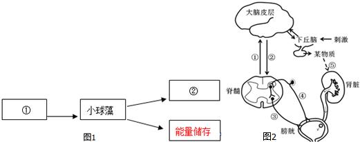 3.如图1是与人体内尿液形成与排出相关的部分调节简图.