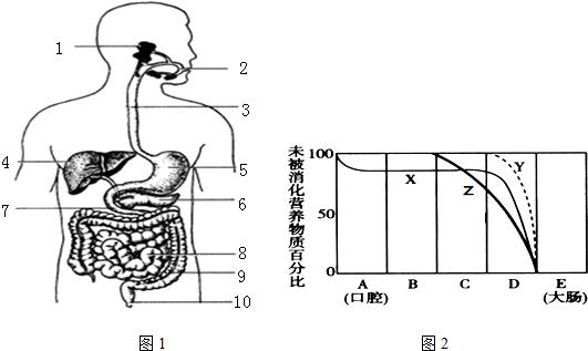 图1是消化系统结构示意图,图2中的曲线分别表示淀粉,脂肪和蛋白质在