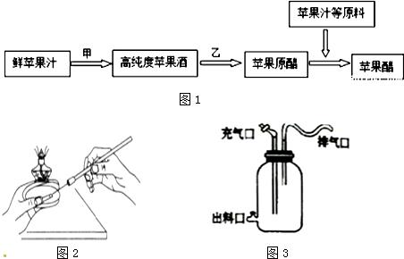 生物模型手工制作真核
