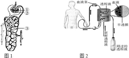 肾单位是形成尿的结构和功能单位,图1是肾单位的结构示意图,图2是肾