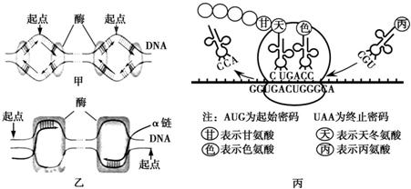 如图中甲,乙,丙分别表示真核细胞内三种物质的合成过程,请回答下列