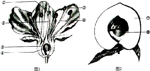 如图为草履虫的结构示意图.请据图回答有关问题:(1)以