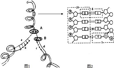 下面图1中DNA分子有a和d两条链.将图1中某一片段放大后如图2所示.结合所学知识回答下列问题 1 从图1可看出DNA复制的方式是半保留复制.特点是边解旋边复制. 2 图1中