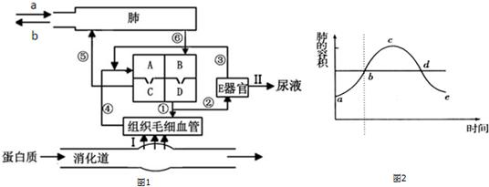 (3)构成e器官结构和功能的基本单位是肾单位.