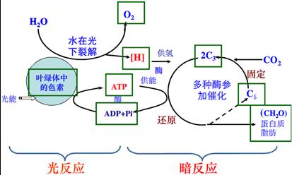 19.图为叶绿体的结构与功能示意图,请据图判断下列说法中正确的是( )