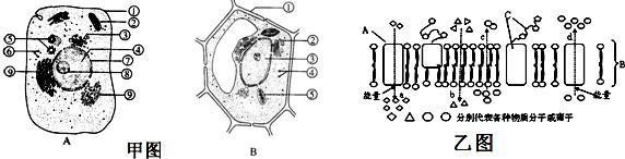 甲图的a,b是细胞的亚显微结构图,乙图是某种膜结构,据图回答下面的