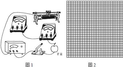 我们知道干燥的苹果表面覆盖有一层绝缘的蜡质物.可研究小组在探索中意外发现苹果的柄和苹果顶部向内凹进的部分竟然是导电的,好象两个天然的电极.请用笔画线代替导线,在图中完成测量苹果电阻的实验电路.