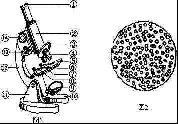 1.观察显微镜结构图1,回答下列问题