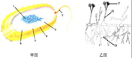 下列表述正確的是 A. 病毒是異養生物,在生態系統中屬于分解者 B