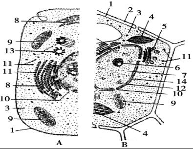 体内射粹�b��.�)�h�_下列只含有一个染色体组的细胞是( )a.果蝇的受精卵b.