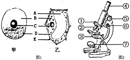 图2是显微镜的结构图,请据图回答问题.特新疆初中面试岗图片