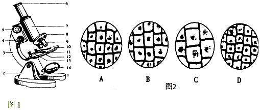 (1)如果载玻片上写着一个b,那么视野中看到的将是q. (2)如果8上安置的两个物镜标有40和10,目镜6上标有10,那么根据图中物镜的安放状态,所观察到物像的长度或宽度(填长度或宽度、面积或体积)是物体的100倍. (3)用4台显微镜观察水绵细胞,在相同环境中,若视野的明暗程度相仿,反光镜的选用一致,则遮光器的光圈最小的一台是C. A.目镜15和物镜45B.目镜15和物镜10 C.目镜5和物镜10D.目镜5和物镜45 (4)若用同一显微镜观察同一标本4次,每次仅调整