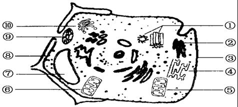 结构上的区别是:植物细胞有:[⑧]细胞壁,[⑨]叶绿体,[⑦]液泡,而动物
