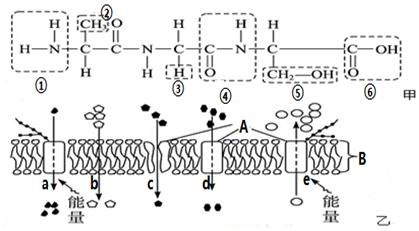 图甲是某化合物(以下称化合物甲)的结构简图,图乙是物质通过细胞膜