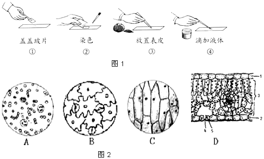 如图是植物细胞和动物细胞的结构示意图,据图回答下列问题:(注意:括号