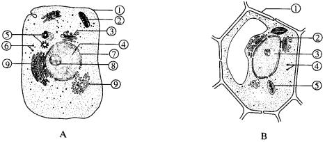 18.如图是细胞亚显微结构图.请根据图回答下面的问题.
