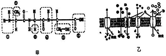 分析 分析图解:图中为有氧呼吸和无氧呼吸的第一阶段,酒精发酵的第二阶段,乳酸发酵的第二阶段,有氧呼吸的第二阶段,有氧呼吸的第三阶段.由此答题. 解答 解:(1)图中表示有氧呼吸的全过程是:有氧呼吸第一阶段,有氧呼吸第二阶段,有氧呼吸第三阶段,有氧呼吸的场所为细胞质基质和线粒体.有氧呼吸的第二阶段产生[H]最多. (2)有氧呼吸第三阶段,利用在前两个阶段脱下的24个(H)与6个氧气分子结合成水,进行有氧呼吸和无氧呼吸的第一阶段在细胞质基质中. (3)苹果储存久了,会闻到酒味,是因为苹果细胞进