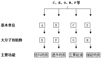 (3)图中g在植物体内主要是淀粉,在动物体内主要是糖原.