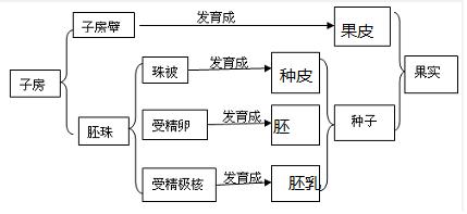 3.如图1是蚕豆和玉米种子结构示意图,请据图回答下列问题