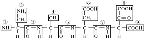 表示羧基的是⑨,表示肽键的是③⑤⑦其结构式-co-nh-.