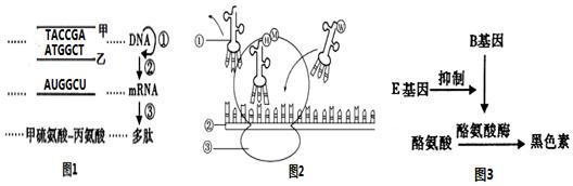 18.下列有关原核细胞与真核细胞的叙述中,错误的是( )