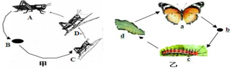 13.如图切片将黑白抄报制成,在显微镜下观察到的叶片结构图,据图分析叶片初中读书手表示图片