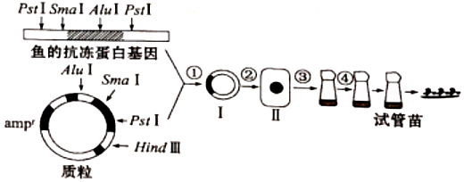 电路 电路图 电子 原理图 520_204