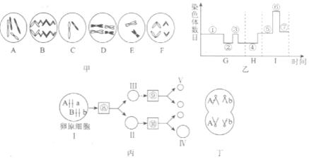 如图甲,乙,丙,丁是真核细胞中几种细胞器的结构模式图,下列相关说法