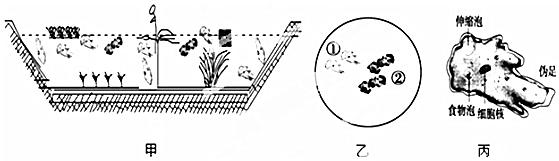 科目:高中生物 来源: 题型:实验题 回答下列有关植物激素及其调节作用的问题. ()图显示胚芽鞘受单侧光照时的生长情况及受光照处生长素的主要运输方向.生长素在植物细胞间的运输常需细胞膜上载体参与. (1)下列激素对植物生长所起的主要作用,与生长素在a处所在作用相反的是AC(多选). A.乙烯B.赤霉素C.脱落酸D.细胞分裂素 (2)生长素沿b方向运输时,其在细胞间跨膜运输的方式主要是主动运输. ()研究表明,适宜浓度的细胞分裂素可以延缓叶片的衰老,生物兴趣小组的同学想通过实验探究适宜浓度的生长素对叶片衰