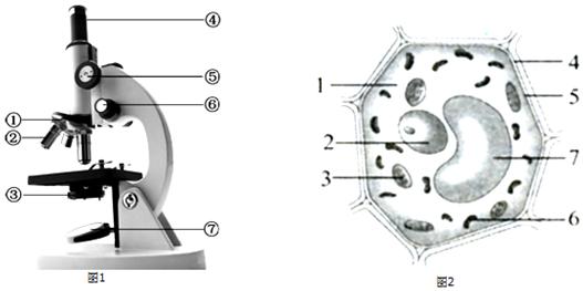 如图是显微镜的植物示意图和结构初中结构模式图,看图回答下列问题民办宁波市细胞图片