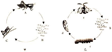 4.如图是两种动物的生殖发育方式图解,请分析回答问题