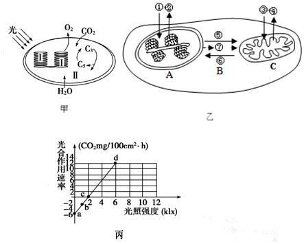 如图甲为叶绿体的结构与功能示意图;图乙表示甘蓝型油菜叶肉细胞内部