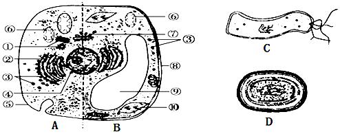 12.细胞是生物体结构和功能的基本单位.