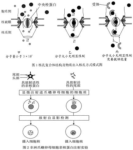 13.为研究外界环境对细胞呼吸的影响.科研人员