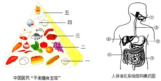 我们在吃桃,李的时候,发现它们的果实只有一个种子,主要原因是( )
