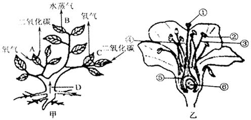 桃树简笔画画法步骤