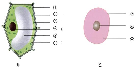 (甲还是乙)图为植物细胞结构示意图,判断依据植物细胞中有细胞壁,液泡