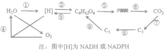 下列有关细胞物质和结构的有关内容,正确的是( )