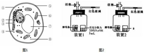 1.酵母菌是一类单细胞真菌,图1是其亚显微结构示意图.据图回答