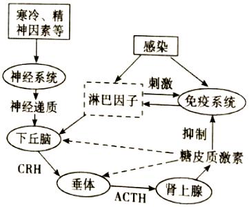 免疫系统调节网络.据图回答 1 图中的信号分子有淋巴因子.神经递质.