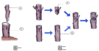 血浆和血清的区别( )A.血浆里有血细胞.血清里