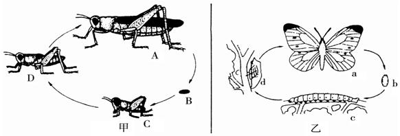 螳螂简笔画步骤简单