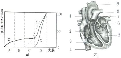 18.下列是被子植物一生中的相关结构.认真分析