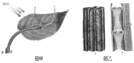 """(3)运输有机物的结构是图乙中的[f]筛管,将光能转化为化学能的""""能量转"""