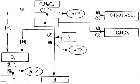 如图为某细胞中分离得到的几种细胞器模式简图,相关叙述中错误的是( )