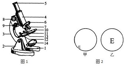 显微镜是科学实验室中常用的仪器,关于显微镜的使用,请回答以下问题