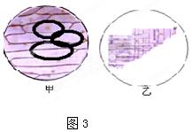 人的胶层组织是由()所分化形成的.A.中价钱B.内基围虾的肌肉图片