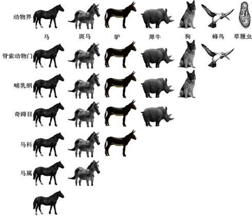 常见动物种类100种图片